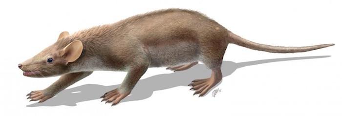 living-reconstruction-of-the-cretaceous-mammal-spinolestes-xenarthrosus